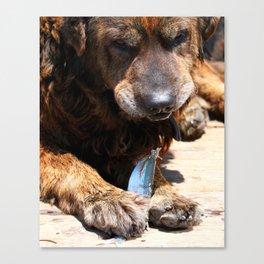 Dog Eating Fish Canvas Print
