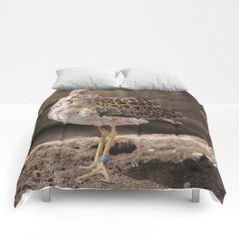 Wearing brown Comforters