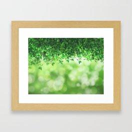 Leaves green nature Framed Art Print