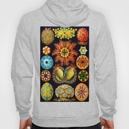 Sea Squirts (Ascidiacea) by Ernst Haeckel Hoody