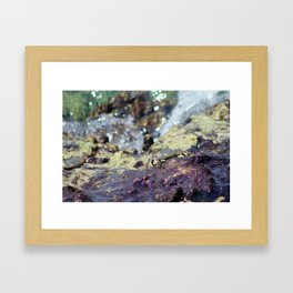 Crab in the Cayman Islands Framed Art Print