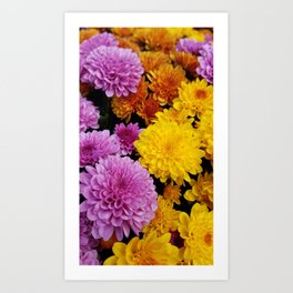 Bunches of Mums Art Print