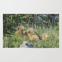 Triplet Bear Cubs Nursing, No. 1 Rug