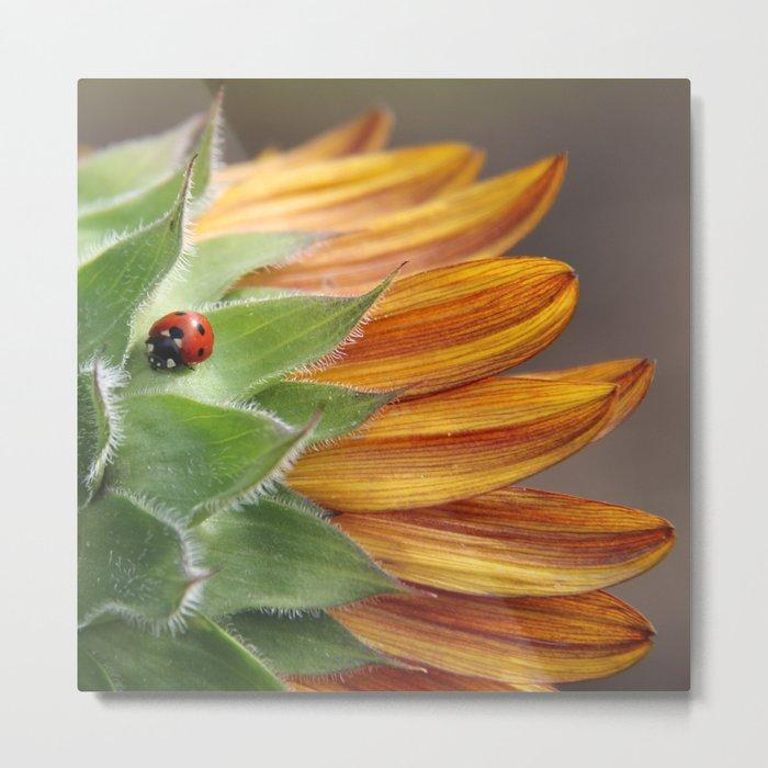 Ladybug on Sunflower Metal Print