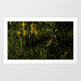 The Daffodil Crew Art Print