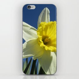 Daffodil Out of the Blue iPhone Skin
