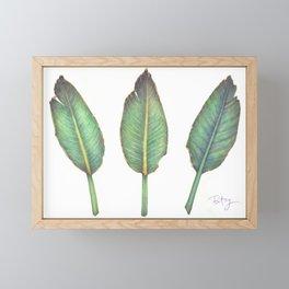 Birds of Paradise (Strelitzia Reginea) Leaves Framed Mini Art Print