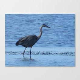 Blue Heron at Tillamook Bay Canvas Print