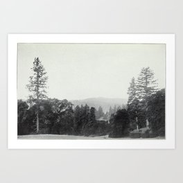 Vintage Photo Print - California Tanbark Oak (1911) - Tanbark Oak Country, in the Redwood Belt Art Print