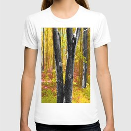 Yellow Trees in Summer T-shirt