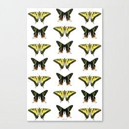 Butterflies & Moths Canvas Print