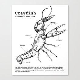 Crayfish Canvas Print