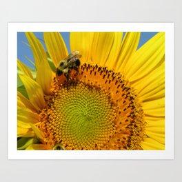 Bee A Sunflower Art Print