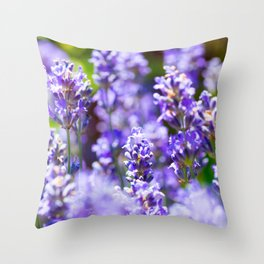 Bunch of beautiful lavender flowers in close-up from France Throw Pillow