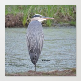 Blue Heron at Hillsboro Pond Canvas Print