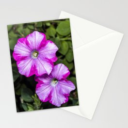 Pair of Petunia flowers Stationery Cards