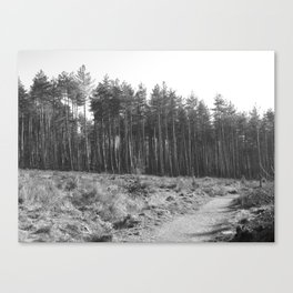 Parkhurst Forest - Newport - Isle of Wight #4 Canvas Print