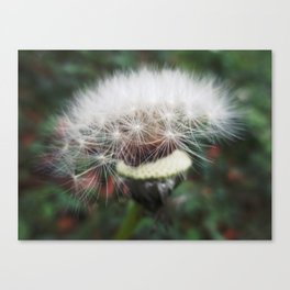 Dreamy Dandelion Canvas Print
