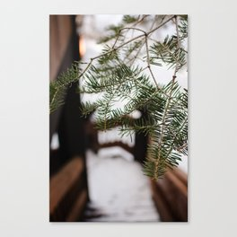 The Smell of Pine in Winter Canvas Print
