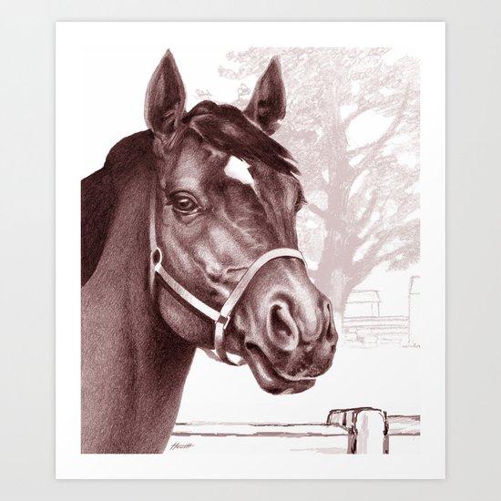 Stare of The Stallion Art Print