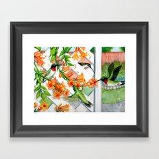 Hummingbirds and Trumpet Vines Framed Art Print