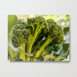 Broccoli Metal Print