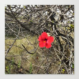 Being Alive - Red Hibiscus Flower Canvas Print