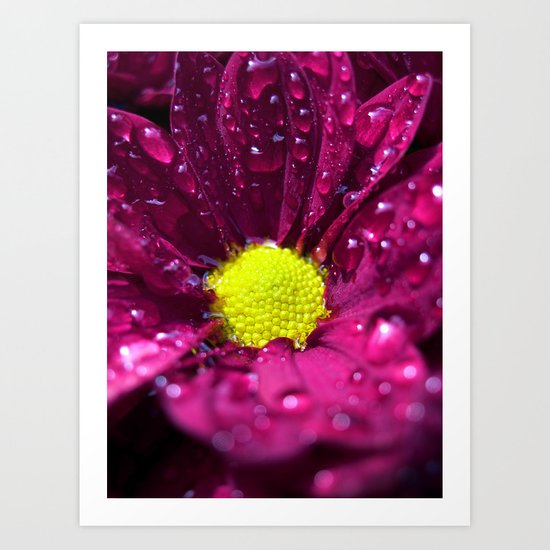 purple bloom II Art Print