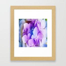 Rainbow Hydrangea Framed Art Print