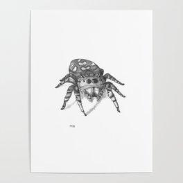 Inktober 2016: Jumping Spider Poster