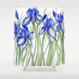 Blue Iris, Illustration Shower Curtain