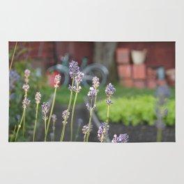 Lavendel Rug
