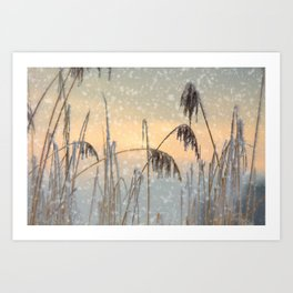 Phragmites Reed grass in the snowfall Art Print