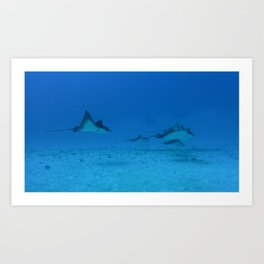 Spotted Eagle Ray Family Art Print