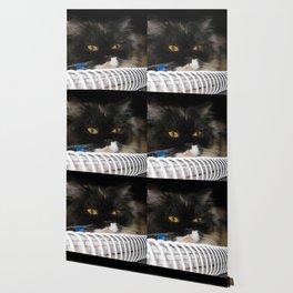 Cat Wanna Study Wallpaper