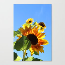 Sunflower, WA Canvas Print