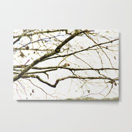 Redpoll birds in aspen tree Metal Print