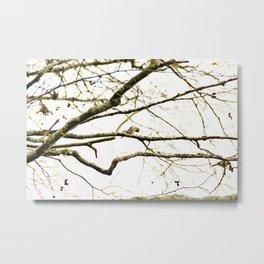Redpoll birds in aspen tree Metal Print