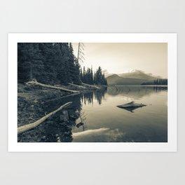 Pine Trees 6 Art Print