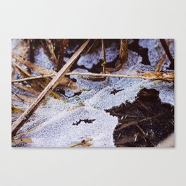 tiny leaves through the permafrost Canvas Print