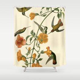Mangrove Humming Bird (Trochilidae) Shower Curtain