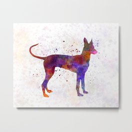 Cirneco dell Etna in watercolor Metal Print