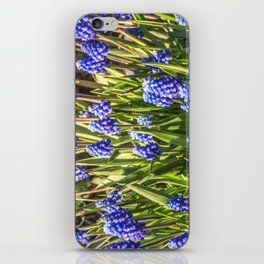 Grape hyacinths muscari iPhone Skin