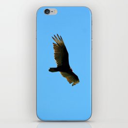 A Turkey Vulture In Tobermory iPhone Skin
