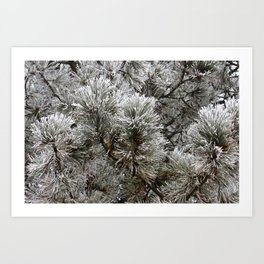 Frosty Pine Tree Art Print