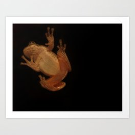 Window Frog Art Print