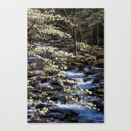 Smoky Dogwoods 05 Canvas Print