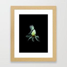 Golden Yellow Fish - 127 Framed Art Print