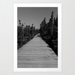 walkway through the trees Art Print
