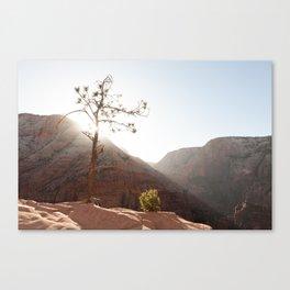 Morning Light on Angel's Landing Tree (Zion National Park, Utah) Canvas Print
